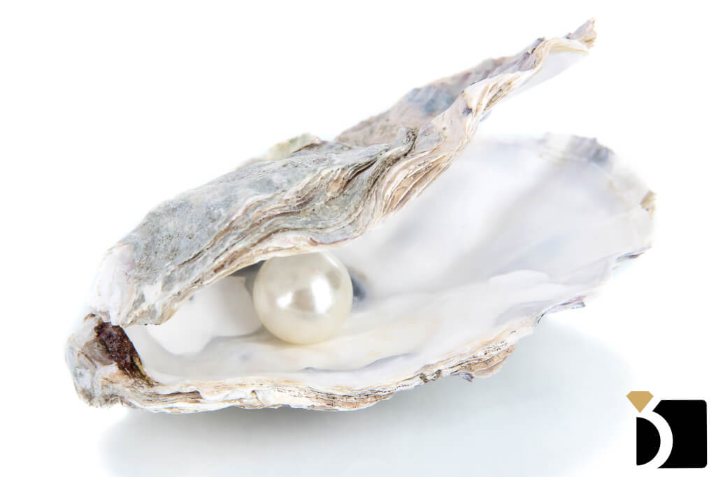A Molusk With a Pearl In it